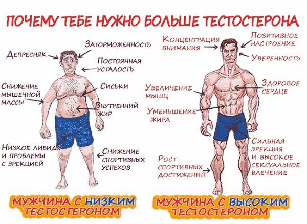 зачем нам нужен тестостерон