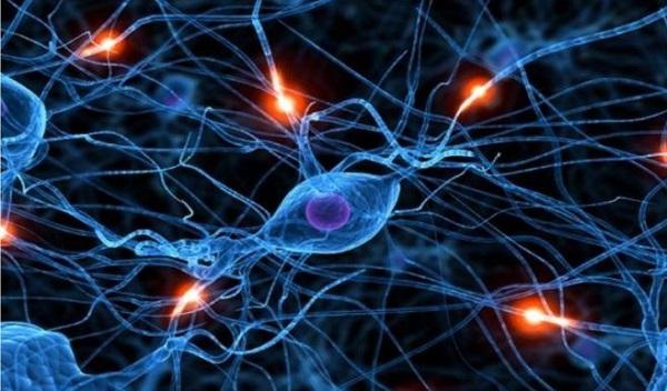 механизм действия гормона